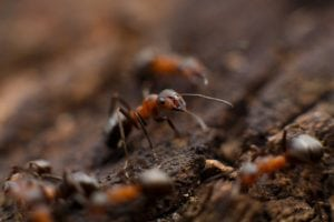 deadly animals ants