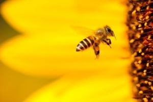 deadly animals bees