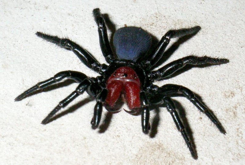deadly animals spiders