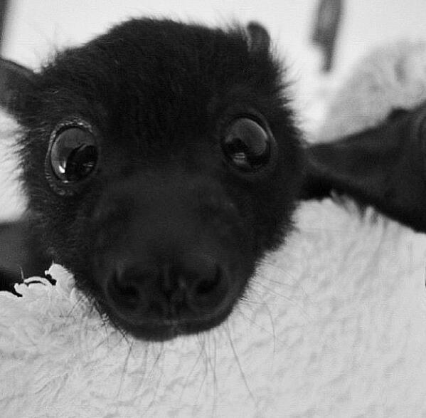 deadly animals Bats
