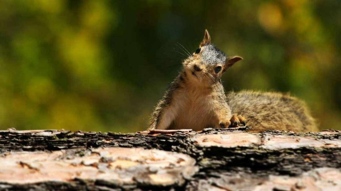 deadly animals Squirrels