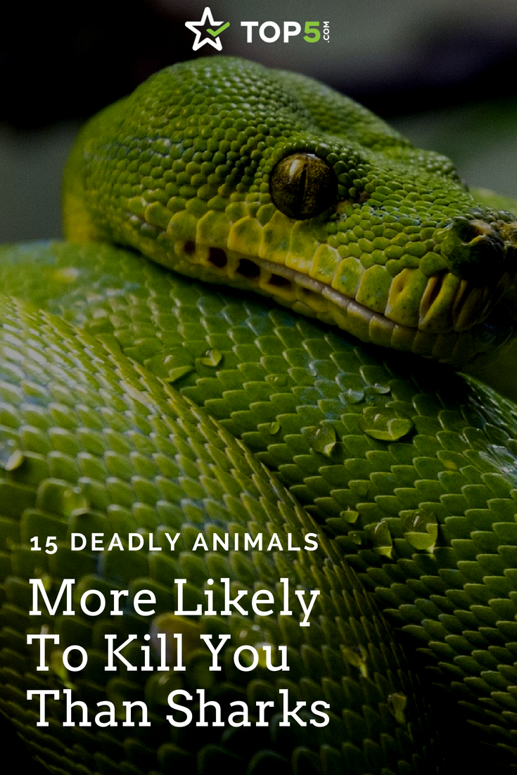 deadly animals