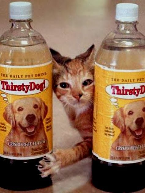 failed products thirsty dog