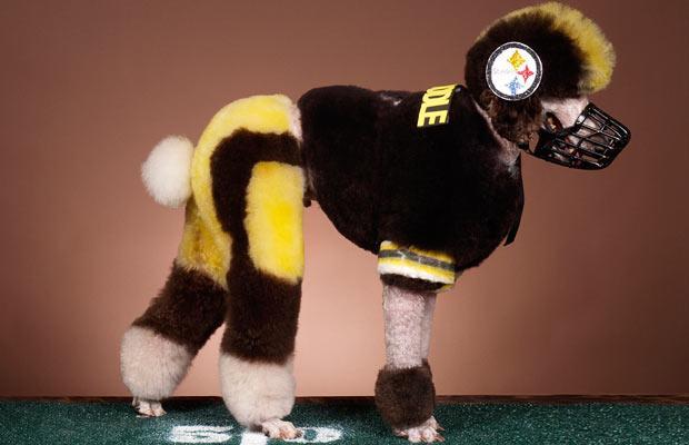football player crazy dog haircuts