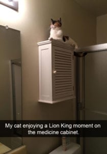 funny cat pictures light lion king