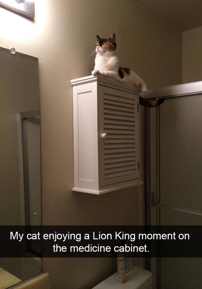 funny cat pictures | Lion King moment