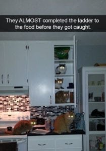 funny cat pictures light ladder night