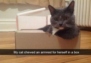 funny cat pictures light armrest box
