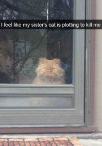 funny cat pictures plotting