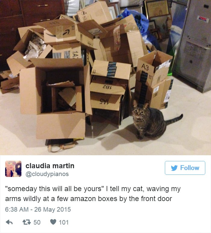funny cat pictures | cat with cardboard box hoard