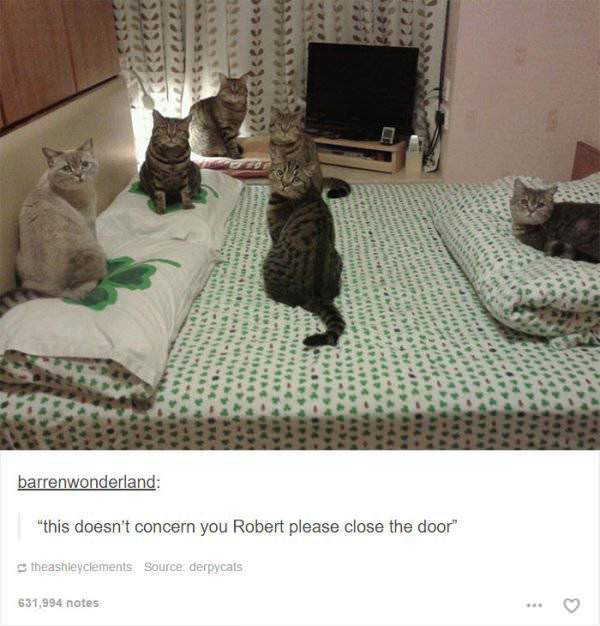 funny cat pictures | cats meeting on bed