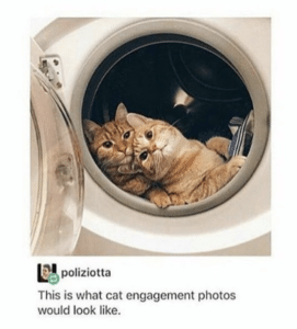 funny cat pictures engagement