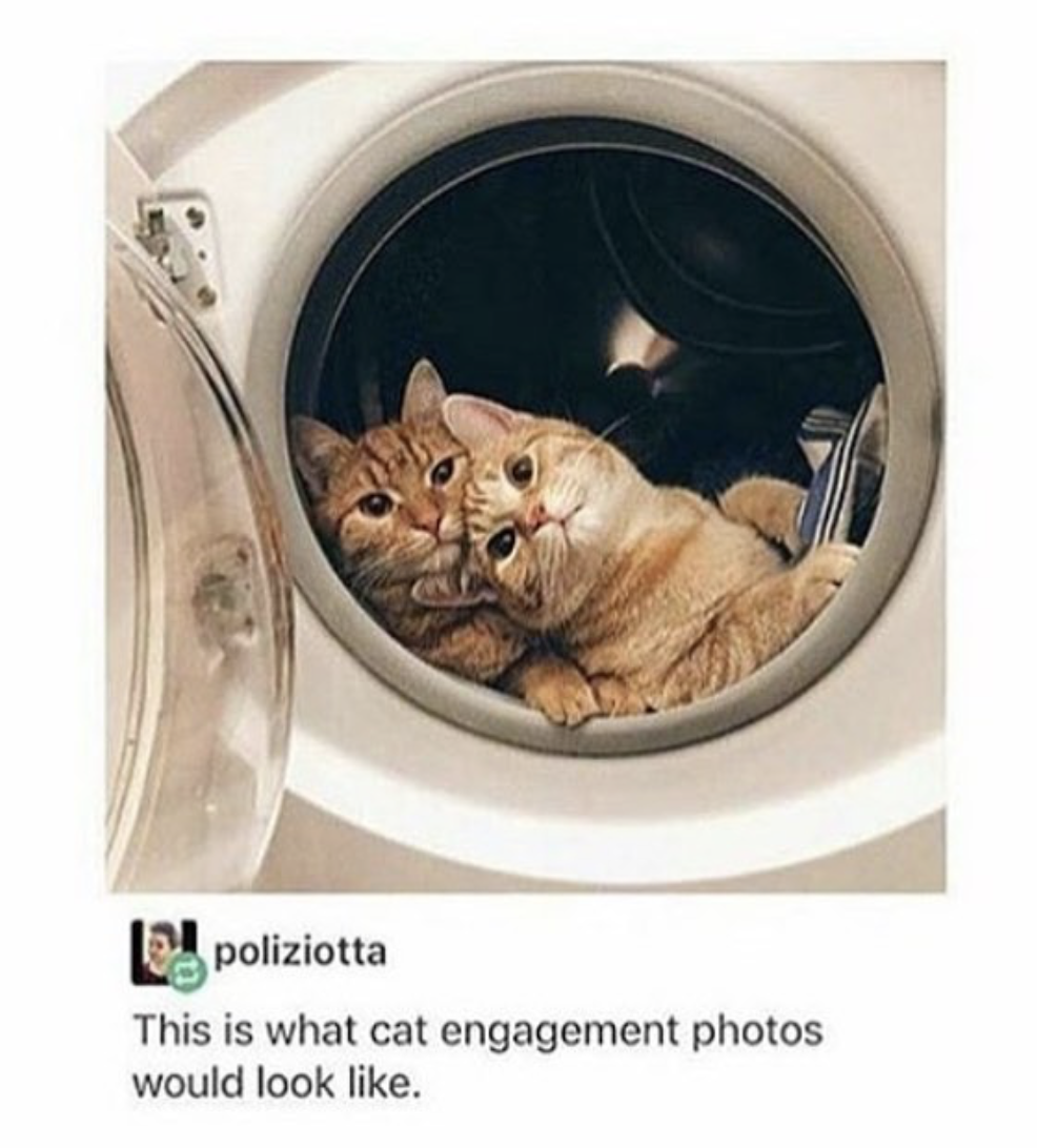 funny cat pictures | cats in dryer