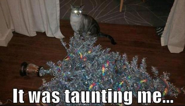 funny cat pictures: fallen Christmas tree
