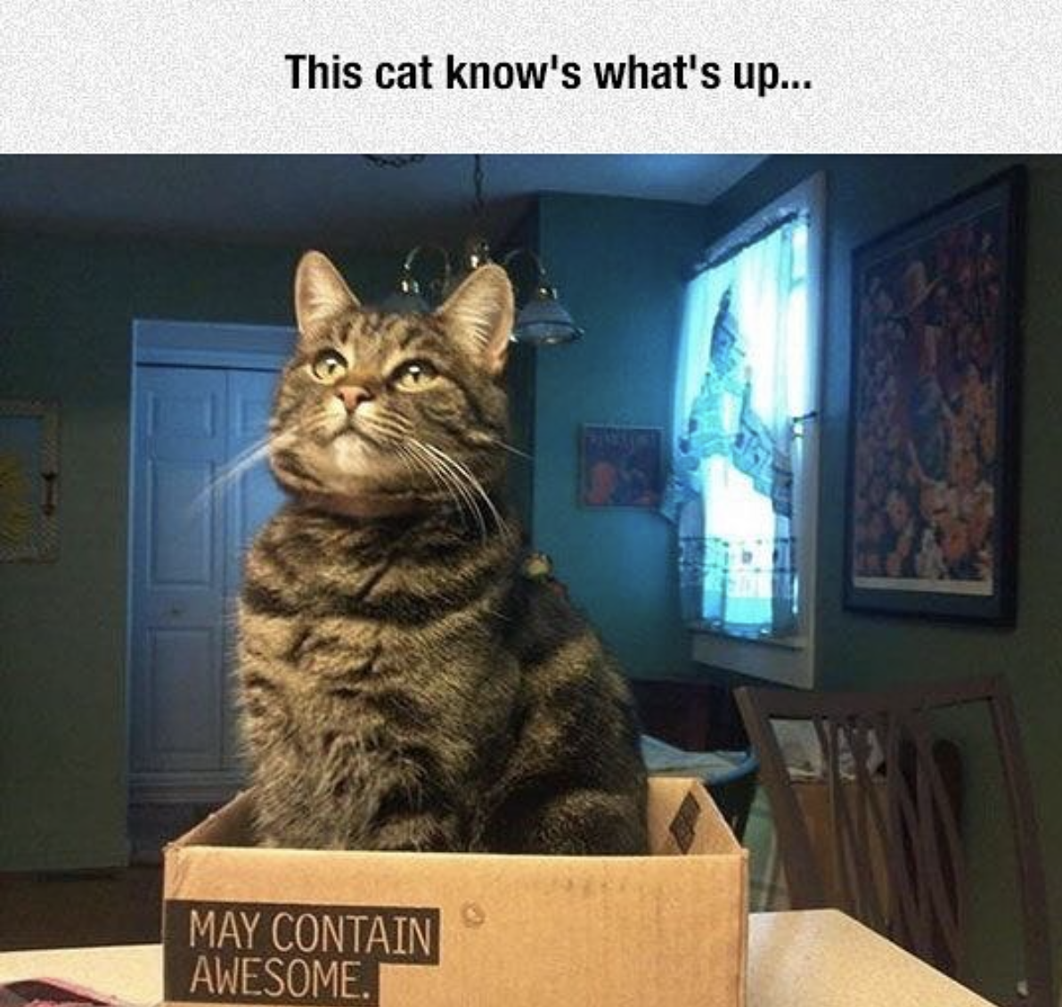 funny cat pictures awesome box