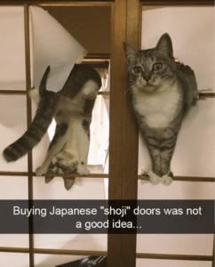 funny cat pictures shoji windows