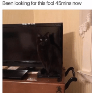 funny cat pictures light tv