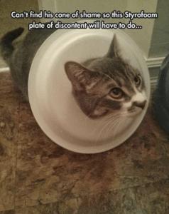 funny cat pictures light styrofoam