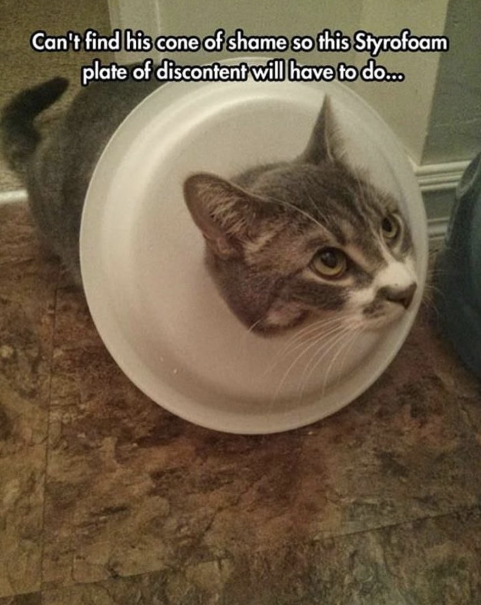 funny cat pictures | styrofoam plate of discontent