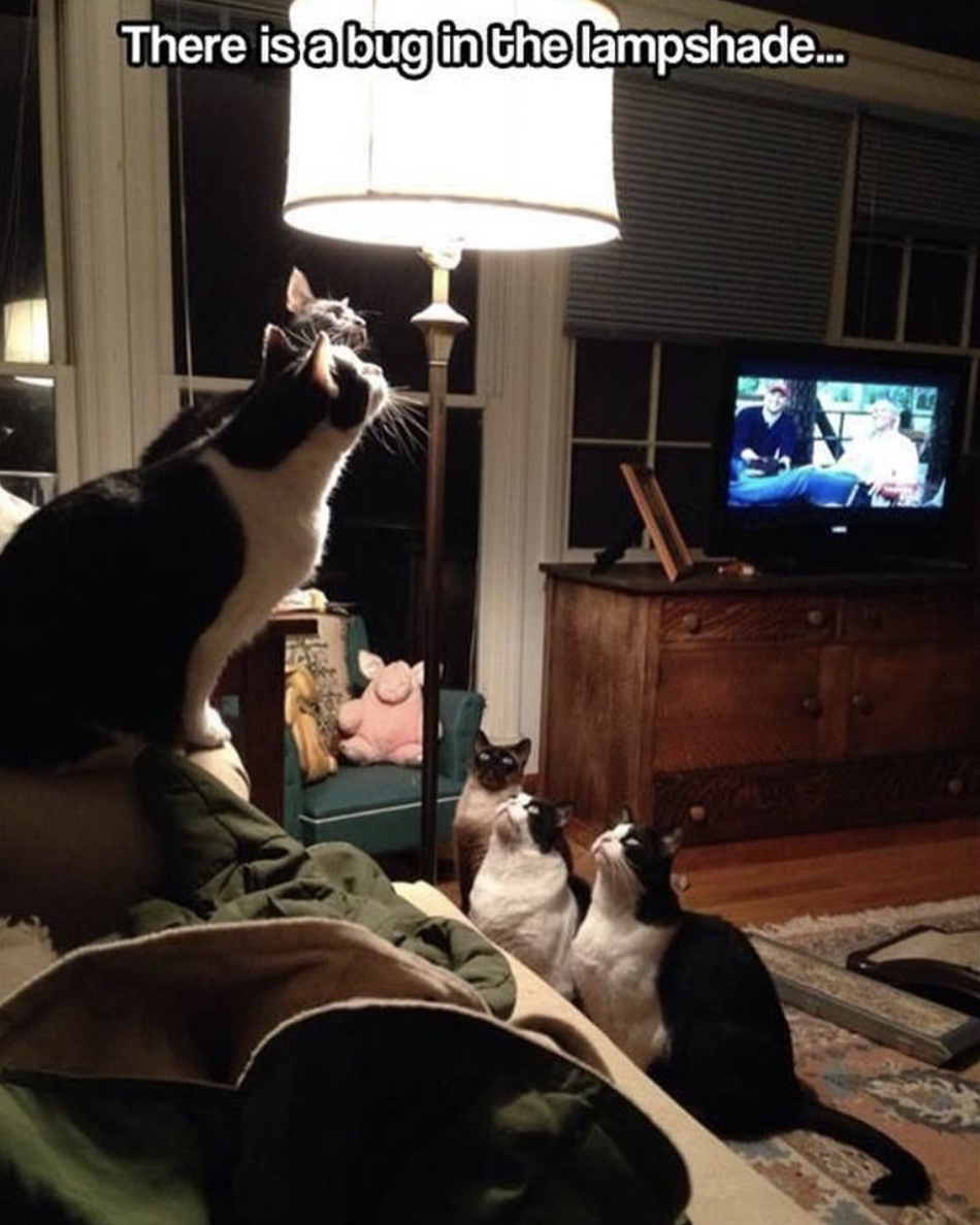 funny cat pictures | cats staring at bug in lampshade
