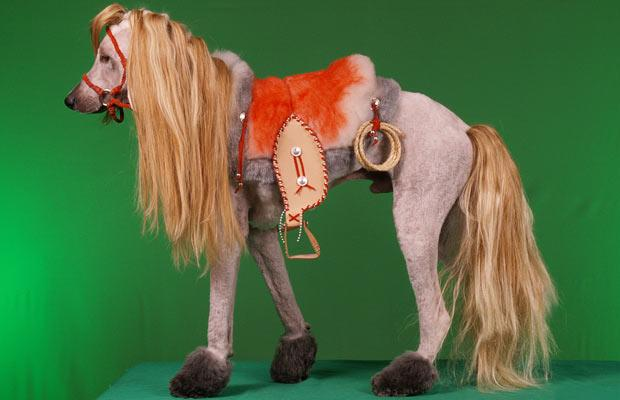 horse crazy dog haircuts