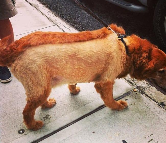 hotdog crazy dog haircuts