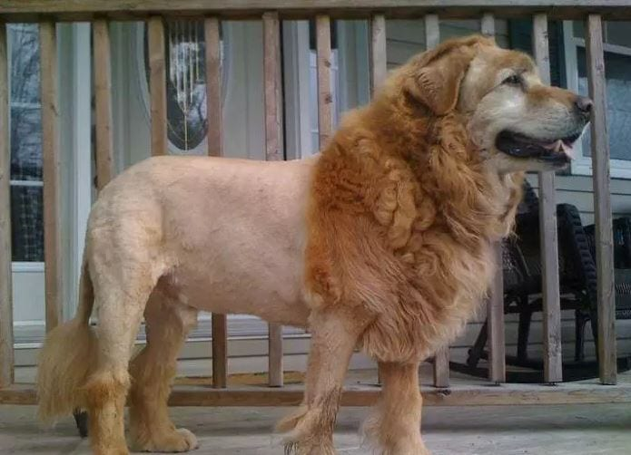 is that a lion