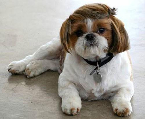 old man crazy dog haircuts
