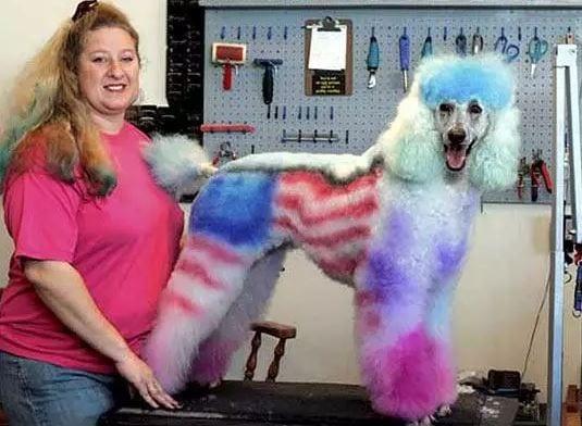 patriotic poodle paint