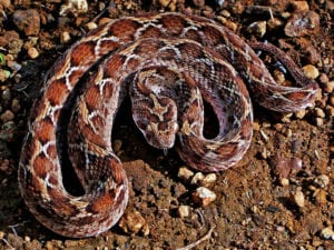 deadly animals snakes