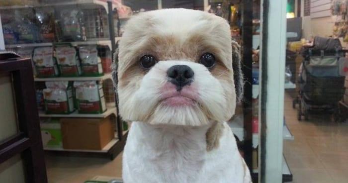 squarehead crazy dog haircuts
