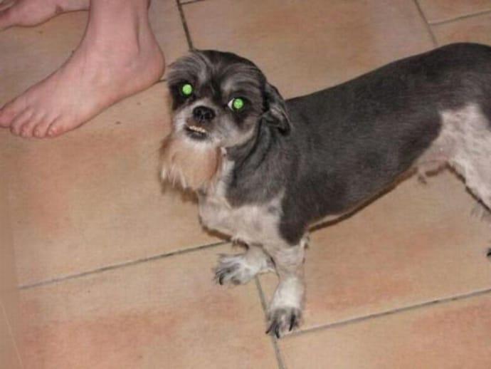 uncle sam crazy dog haircuts