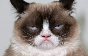 viral internet sensations grumpy cat