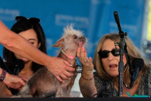A runner-up in the 2018 world's ugliest dog contest