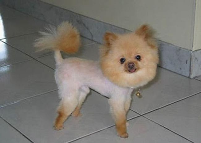 worst crazy dog haircuts pictures