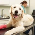 Is Pet Insurance Worth Getting?