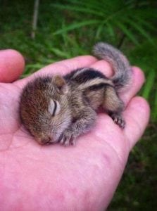 cute babe animal - baby chipmunk