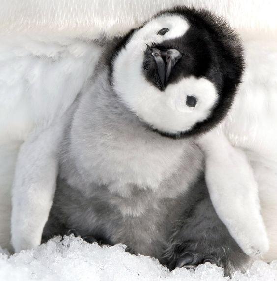 cute baby animals - penguin