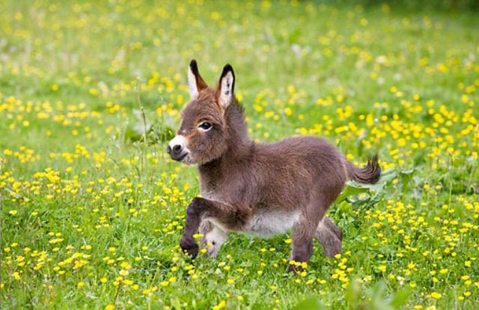 cute baby animals - baby donkey