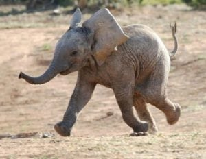 cute baby animals - baby elements