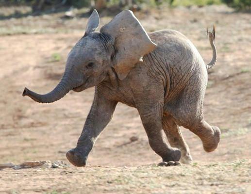 cute baby animals - baby elephant