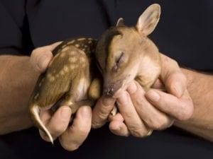 cute baby animals - dear