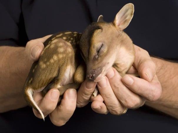 cute baby animals - baby deer