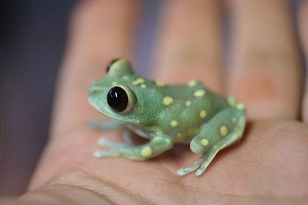 cute baby animals - frog