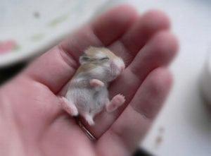 cute baby animals -hamster