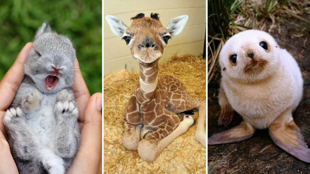 Cute Baby Animals That Will Make You Go 'Aww'