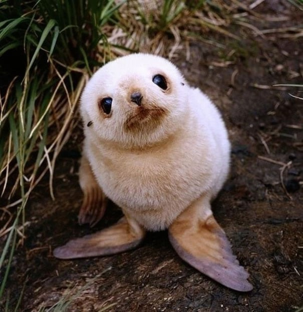 cute baby animals - seal