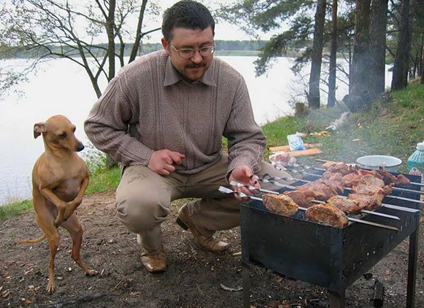 dog begging at the grill