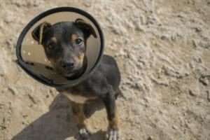How does pet insurance work: it covers accidents and illness