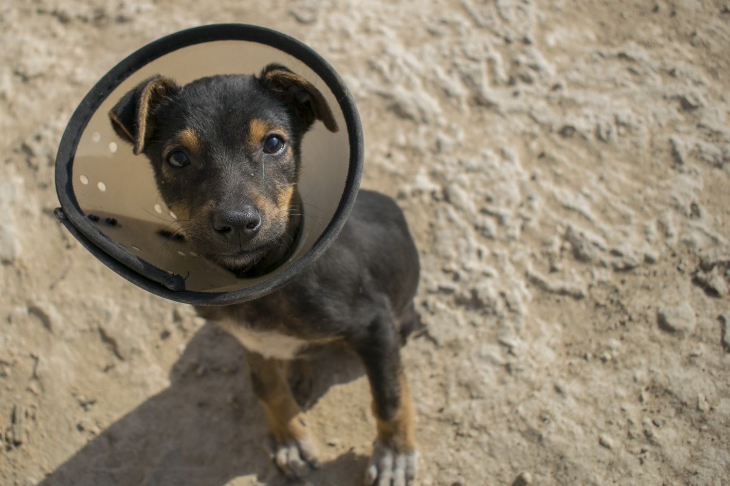 "How does pet insurance work: It covers accidents and illnesses. ""width ="" 1500 ""height ="" 1000"